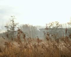 Fog series II