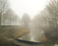 Fog Series III