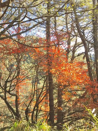 阿丹南湖登山14
