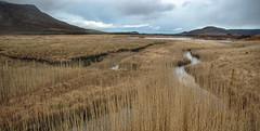 Moorlandschaft III Connemara, Irland