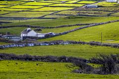 Landschaft irische Westküste