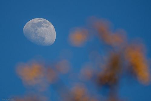 lune et couleurs miel