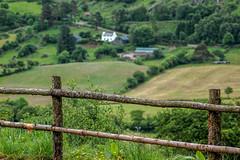 Killarney National Park II, Irland