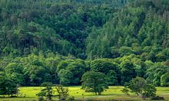 Parklandschaft bei Muckross House, Killarney National Park, Irland