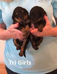 Irma Tri Girls pic 2 3-26