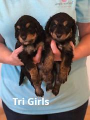 Rosie Tri GIrls pic 4 3-26