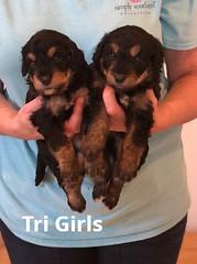 Rosie Tri GIrls pic 3 3-26