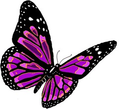 butterfly-png-images-4