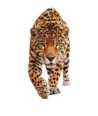 jaguar_PNG20738