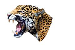 jaguar_PNG20743