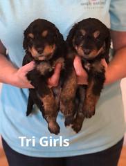 Rosie Tri Girl 3-26