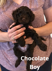 Baylee Chocolate Boy 3-27