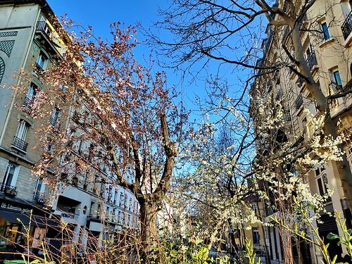 69 - Paris en Mars 2021 - les arbres fleurissent rue Dupetit-Thouars