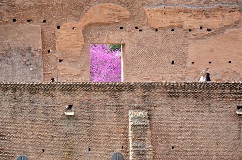 Redbud Through The Ruins