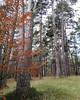 Micología: Tres Bosques - Fundación Cerezales