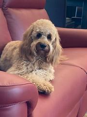 Hi I'm Sophie - a sweet Kasey & Nolan puppy