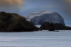 Photo of the bass rock from Scoughall Rocks