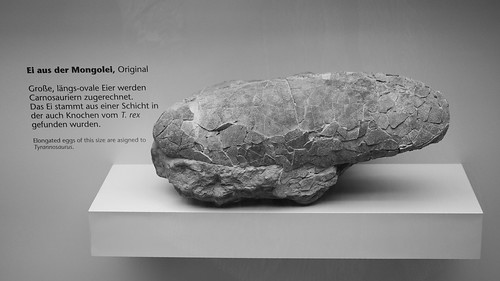 A really old egg - fossilized dinosaur egg