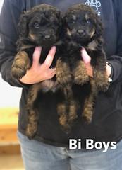 Rosie Bi Boys pic 2 4-2
