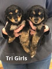 Rosie Tri Grils pic 2 4-2