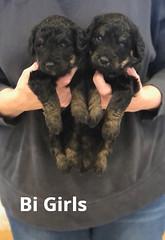 Irma Bi Girls pic 3 4-2