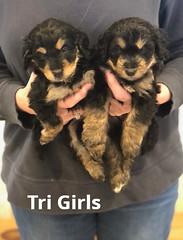 Rosie Tri Girls pic 3 4-2