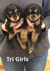 Rosie Tri Girls pic 4 4-2