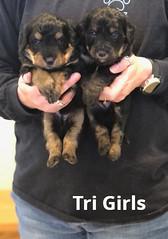 Irma Tri Girls pic 3 4-2