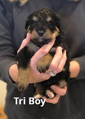 Irma Tri Boy pic 4 4-2