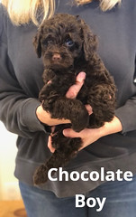 Baylee Chocolate Boy pic 2 4-2