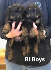 Rosie Bi Boys 4-2