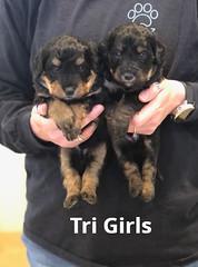 Irma Tri Girls pic 4 4-2