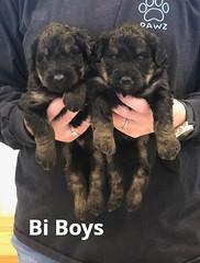 Irma Bi Boys 4-2