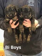 Irma Bi Boys pic 2 4-2
