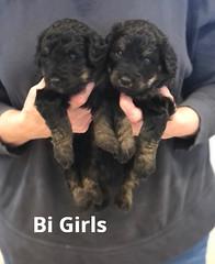 Irma Bi Girls 4-2