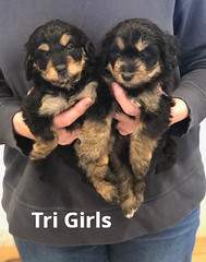 Rosie Tri Girls 4-2