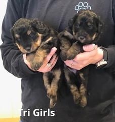 Irma Tri Girls 4-2