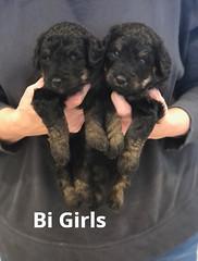 Irma Bi Girls pic 2 4-2