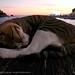 Seascape sleep 1