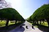 カイヅカイブキの並木道