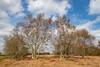 Highfield Moss Trees