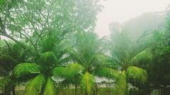 095: lush (tropical rain)