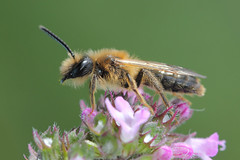 Photo of Whoopsie-beesy