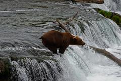 Unforgettable Adventures (Katmai National Park & Preserve)