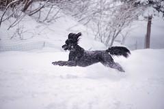 Snow Zoomies!