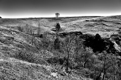 A Fold Across the Earth and a Lone Tree Up Top (Black & White, Theodore Roosevelt National Park)