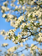 96/365 - More Spring