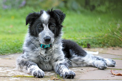 Photo of Get a collie, she said!