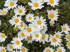 April 7: Flower - Number 97