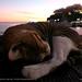 Seascape sleep 2